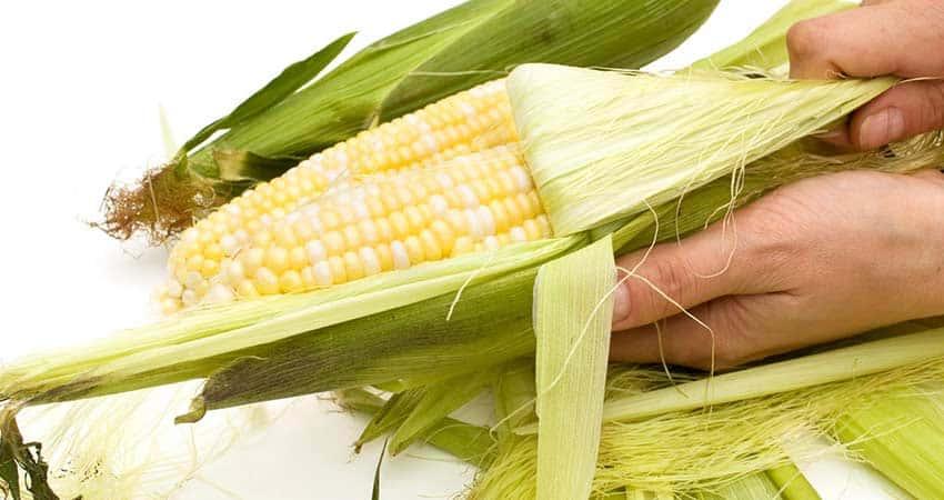 corn-husk-fibrous-food-waste