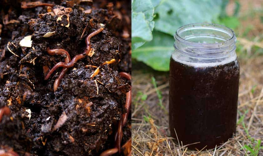 what-is-worm-tea-compost-tea-worm-castings