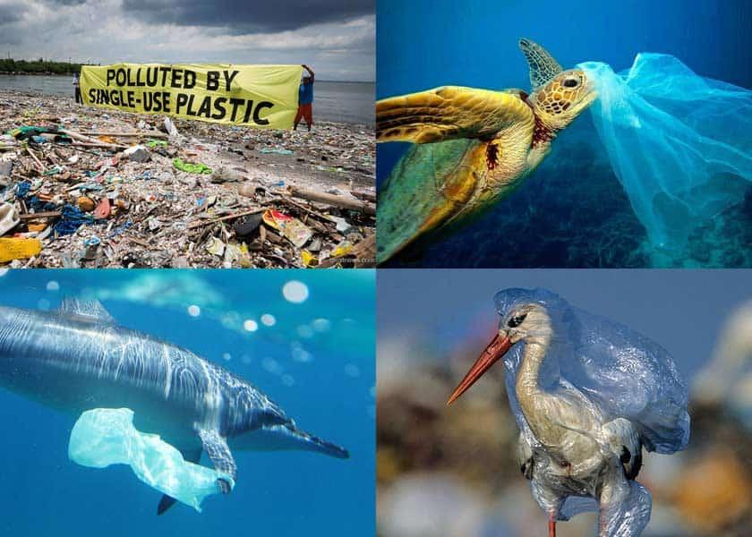 Einweg-Plastiktüte-Verschmutzung-Abfall-Umwelt-Tiere